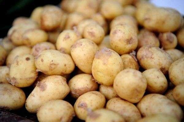 Россельхознадзор остановил ввоз из Азербайджана почти 40 тонн зараженного картофеля