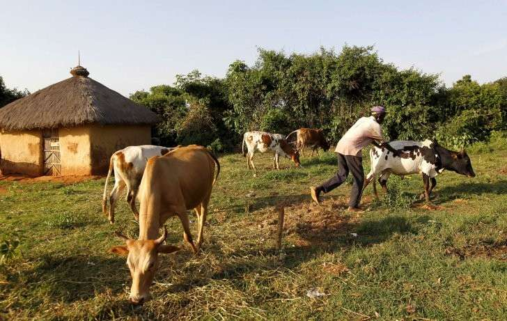Белоруссия: как китайцы планируют перестраивать сельское хозяйство