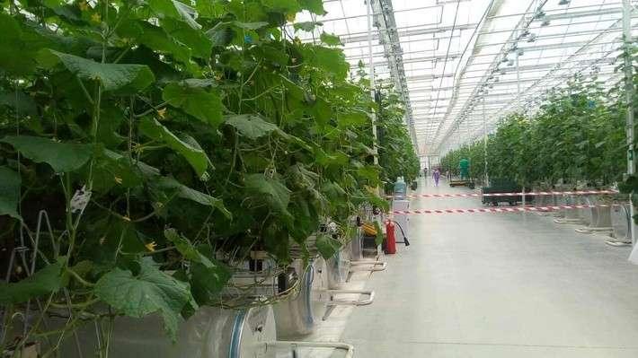 ВЛипецкой области открыли тепличный комплекс