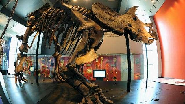 Ученый уволен за доказательства недавнего существования динозавров