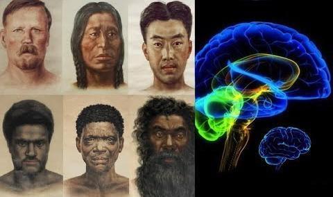 Разные расы – разное развитие мозга! – доктор биологических наук