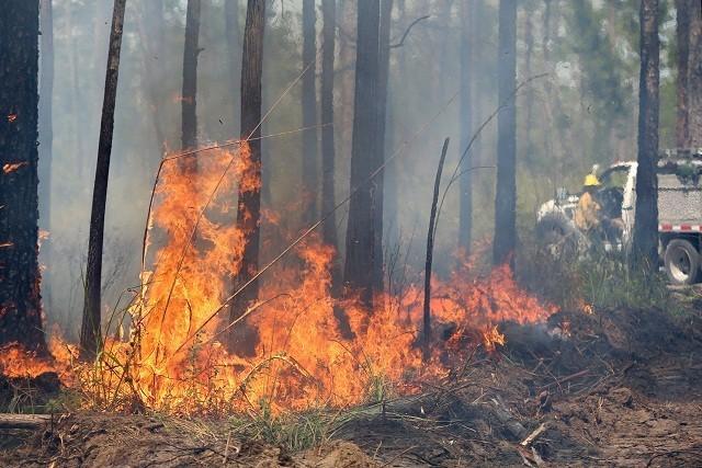 В Забайкалье действуют 26 лесных пожаров на площади 7041 гектаров
