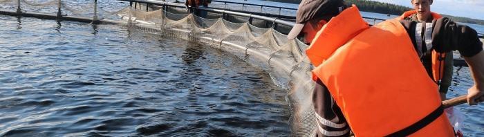 «Русская аквакультура» приобрела норвежский смолтовый завод Villa Smolt AS