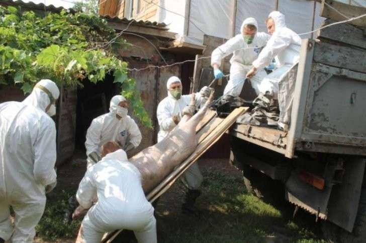 Зачем США превращают Украину в бомбу с биологическим оружием