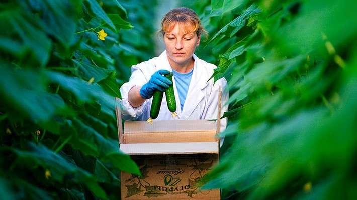 Россия в 2017 году в разы увеличила экспорт овощей