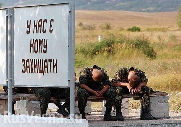 Каратели и мародёры из ВСУ меняют боеприпасы на алкоголь и наркотики | Русская весна