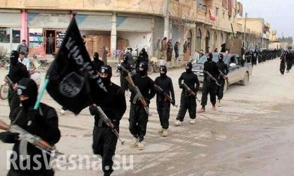 Интерпол посчитал смертников, готовых взорвать себя в Европе во имя Халифата | Русская весна