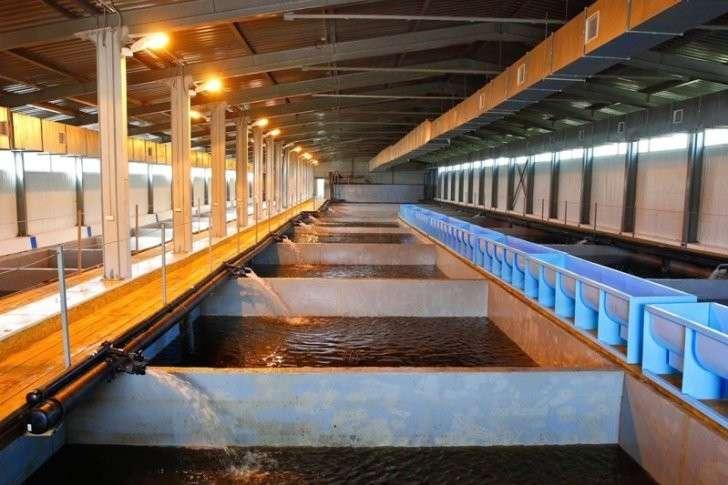 32. В Тюменской области модернизировано крупнейшее рыбоводное предприятие завод, политика, проивзодство, россия, строительство