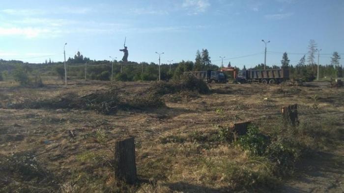 Волгоград: вырубили «Парк вдов» героев Сталинграда, высаженный женами погибших бойцов