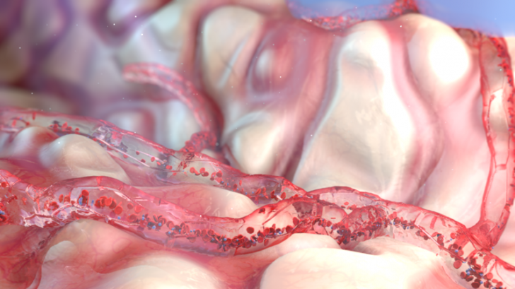 Красивых биомедицинских картинок пост биология, визуализация, медицина, наука, человек