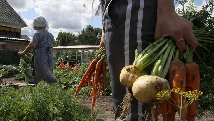 Владимир Путин подписал закон о садоводческих и огороднических товариществах