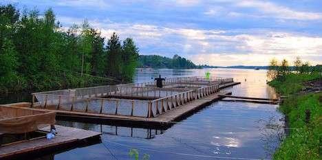 В Ленинградской области открылся цех по переработке рыбы политика, проивзодство, россия, строительство