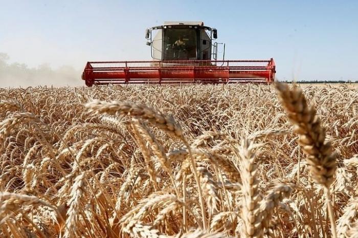 В Краснодарском крае собирают рекордные урожаи