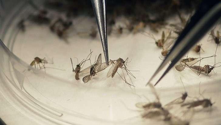 БиоУгроза: боевой вирус Зика научились передавать половым путем