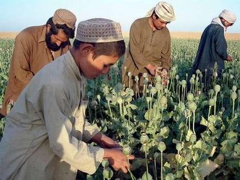 Афганские партизаны, наркота и НАТО. Пиндоская операция «Несокрушимая безнадега»