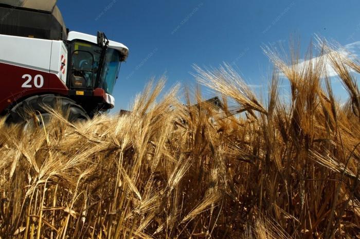 Ставрополье в след заКраснодаромсобрали рекордный урожай зерновых