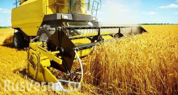 Крым: сельское хозяйство наконец вырывается из украинского болота | Русская весна