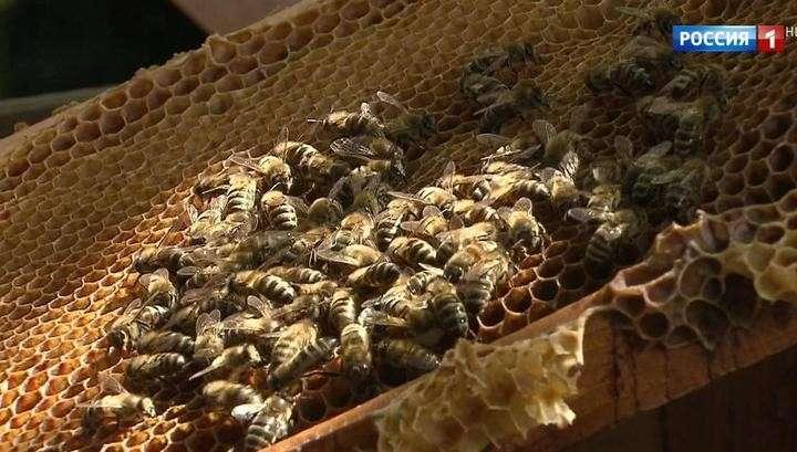Как выбрать правильный мёд и не попасть на суррогат