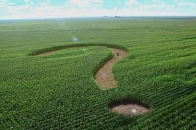 Крым: рекордный урожай. Полуостров возвращает аграрную мощь после украинского безвременья