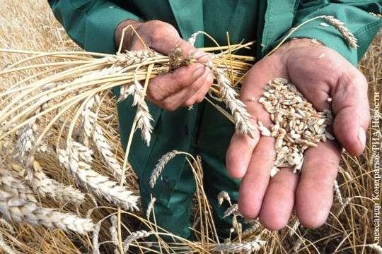 Урожай зерновых 2017 в России продолжает ставить рекорды