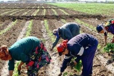 Украине не нужны рабочие руки, зато Польша берет «добровольных» рабов оптом