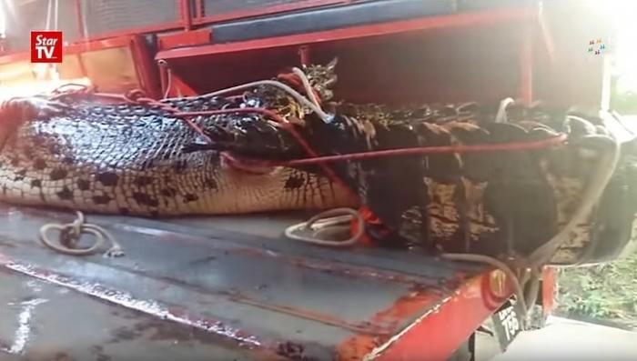 На о. Борнео в Малайзии гигантский крокодил забрался в автосервис