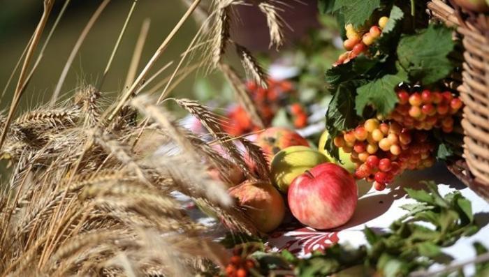 Россия побеждает в мировой «зерновой войне»