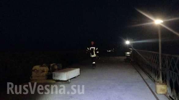 ВМариуполе на отдыхающего напала дикая свинья (ФОТО) | Русская весна