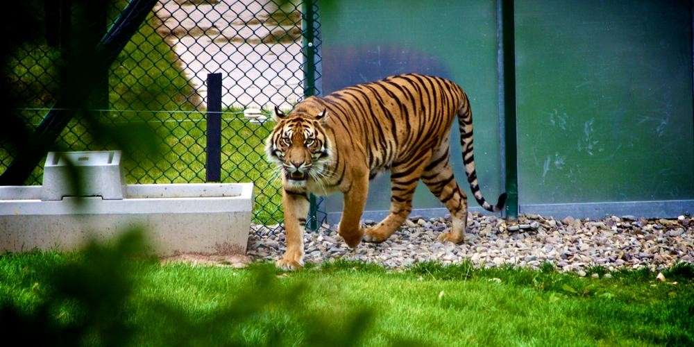 В Швейцарии новая мода: кормить хищников в зоопарке своими домашними любимцами