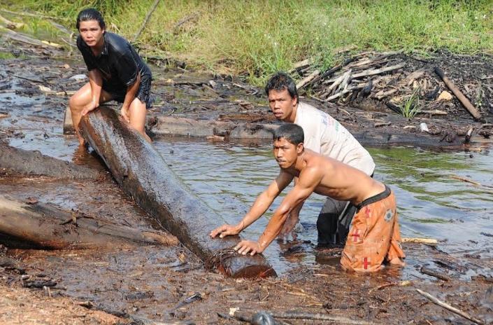 Остров Борнео – линия фронта выживания нашей планеты