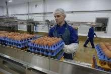 модернизированный завод по переработке яиц
