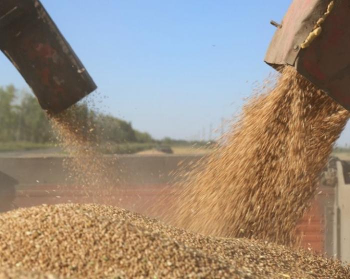 Про зерно, землю, урожай и рекорды России в 2017 году и прогноз на 2018 год