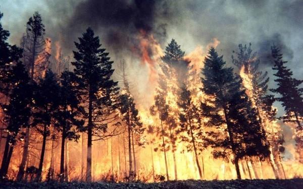 Калифорния: более 20 тысяч человек эвакуированы из-за масштабных лесных пожаров