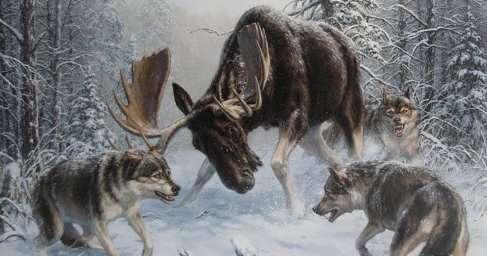 Редкие кадры: коптер снял схватку лося с волком (ВИДЕО)