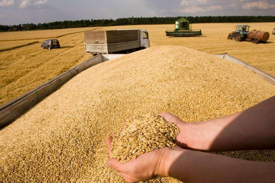 Куда уехал хлеб из России? От рекордного урожая зерновых до «не доедим, но вывезем»
