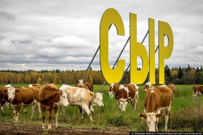После запрета европейских сыров, он обещал нам русский пармезан. Что из этого вышло?