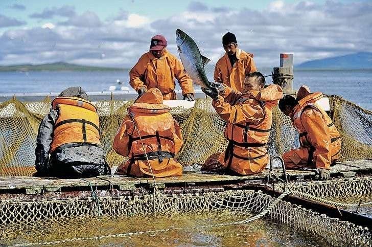 Из морских глубин мы добываем миллионы тонн, только большая часть улова уплывает за границу. Фото: Виктор ГУСЕЙНОВ