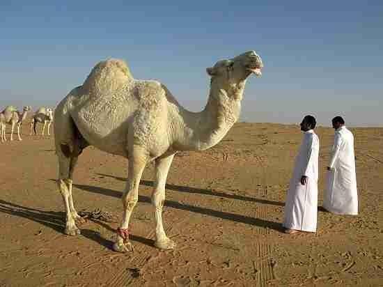 Саудовская Аравия. Передел власти: у принцев отберут $800 млрд