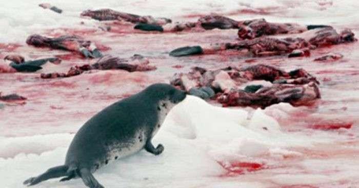 тюленья война - 03
