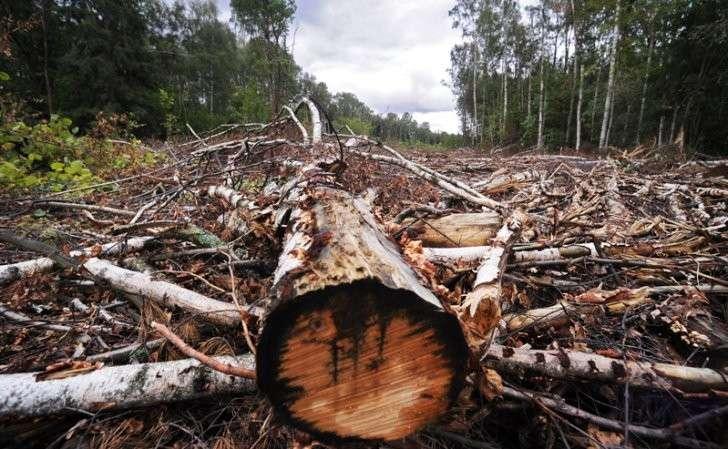 Непреклонная Европа заставит Украину вырубить все леса за грошовые подачки