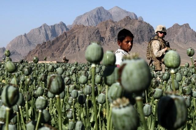 Спецслужбы США добились рекордных размеров посевных площадей опиумного мака в Афганистане