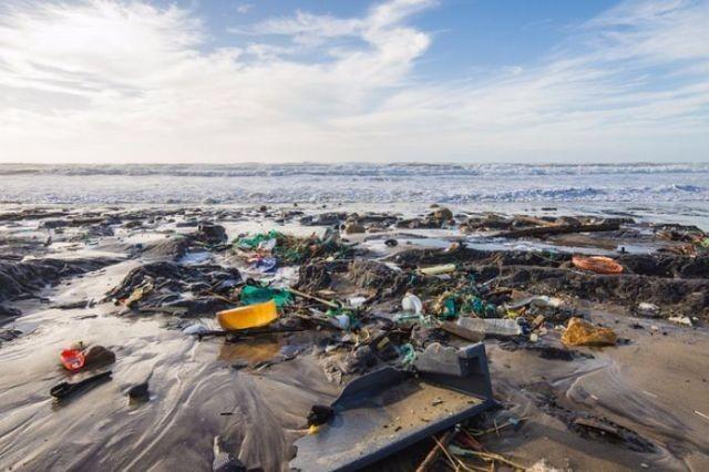 15 000 учёных предупредили об экологической катастрофе на Земле. В чём они ошибаются?