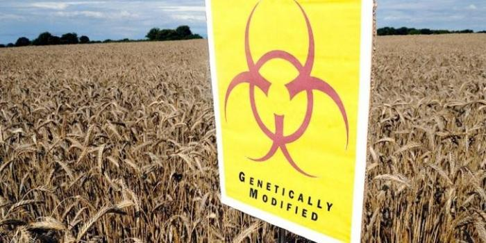 ГМО: Армения вместе с Монсанто будет кормить США генетической гадостью