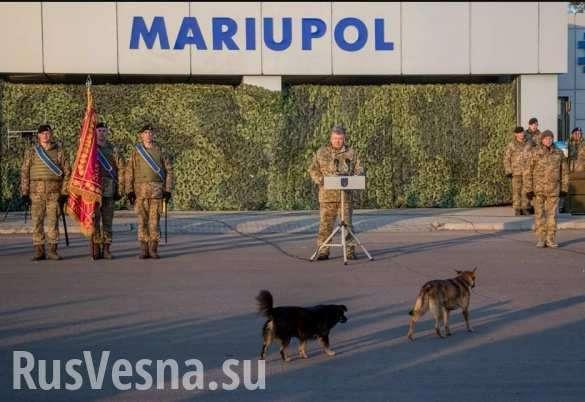 Порошенко и собаки: единственные заинтересованные слушатели генералиссимуса | Русская весна