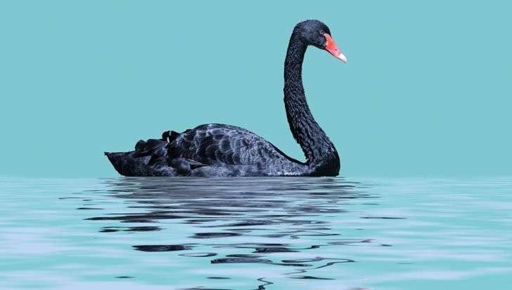 Мировой финансовый кризис: откуда ждать «черного лебедя»