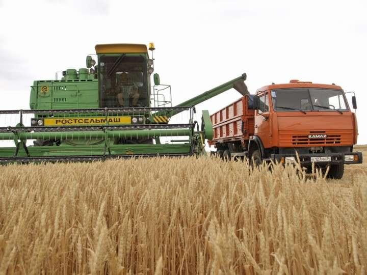 В РФ намолочено 77 млн тонн зерна, на 14 млн больше, чем в 2013 г.