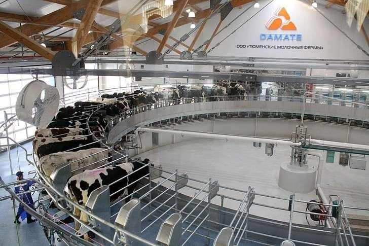 Молочный комплекс на4600 голов открылся вТюменской области