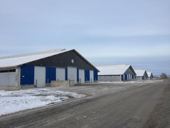 В Тюменской области открылся крупнейший в Сибири молочный комплекс