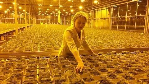 В Нижегородской области введены встрой 4 гектара новых теплиц