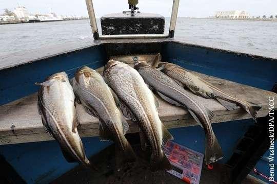 Цены на рыбу в России можно было бы легко снизить. Что делать?